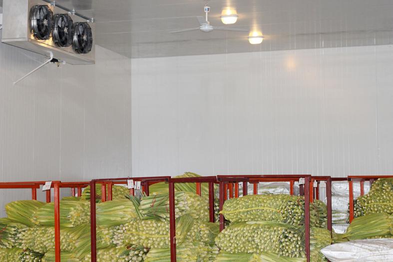 蔬菜保鲜库设计冷库安装